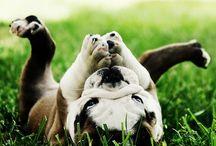 cutereatures / - animals -
