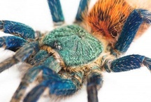 Arachnophobia Nightmares (Spiders) / by Andrea Williams
