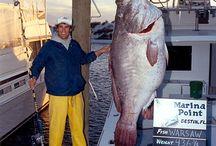 balık budur