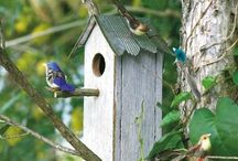 Birds House / by YifatS