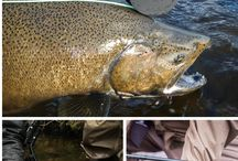 Salmon and Steelhead Fly Rods / Fly Rods for Steelhead and Salmon Fishing