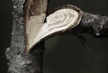 Cœur tronc d'arbre
