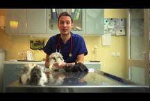 Vétérinaires Sans Frontières / Lorsqu'un animal tombe malade, le village tout entier est concerné...