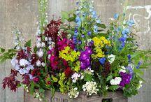 bloemen/planten in huis