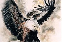 Te koop / Bald Eagle