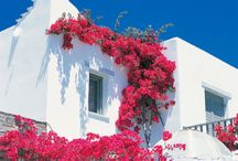 domy w kwiatach / domy w kwiatach