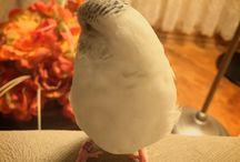 ARMUT KIZ  / Güzel kuşum