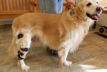 MPB News / News and upcoming events from My Pet's Brace and our patients.