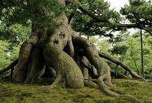 piękne drzewa