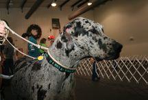 4-H Dog Show
