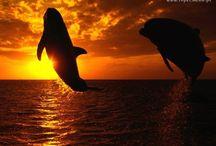 Tapety - zwierzęta - wodne stworzenia - delfiny