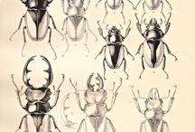 insect_mushi