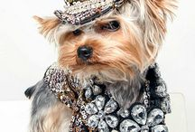 PET FASHION / Dressing up your pet can sometimes be fun!  Here we share just a few of our favorite outfits.  :)