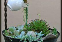Minipuutarha / Fairy garden