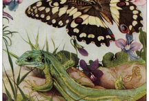 Edward Julius Detmold (1883-1957) / British, Victorian book illustrator