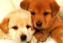 cuccioli!!