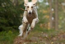 Fuel Their Fun / Dogs love to play. Fuel their fun with wholesome food and treats made with natural ingredients.