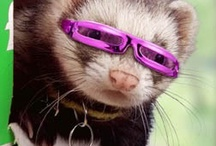 ferrets have more fun / by NELLIE JOHNSTON