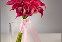 Flowers = Beauty / by Jennifer Gant Powell