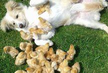 tenerezze animali