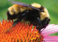Pollinator Week / Celebrated this year from June 20-26, National Pollinator week was designated by the U.S. Department of Agriculture and the U.S. Department of the Interior to raise awareness of declining pollinator populations. This year, we'll be sharing facts and infographics across our social media to learn what we can do to help our partners in pollination. We'll be posting all week on Facebook and Twitter as well—just follow our hashtag #PollinatorPartners and #PollinatorWeek