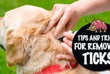 Pets - Removing Ticks