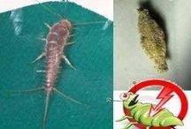 receita caseira (insetos)