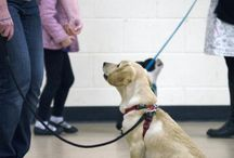 Puppy Training / Here we will post images about our puppy training and top tips about puppies