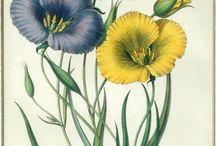 Botanical Stamps