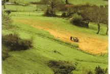 Galicia Vintage