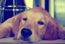 Doggy / by pandu wahyudi