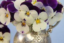 Flowers: Violet