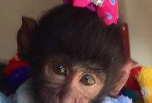 Monkey Matters / Fun fun fun