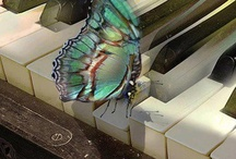Butterfly Love....<3 / by C Johnson