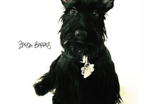 Awesome Scottie Dogs / A collection of photos of the most awesome #scottiedogs #scottishterriers #scotties