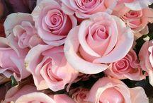 Blomster billeder mm