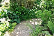 My Dream Backyard / by Anne Cranz