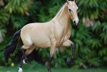 Modelhorses