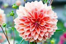 Best summer flowers / Best summer flowers