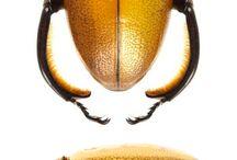 insekty