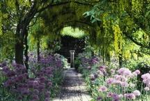Flores e Jardins / by Ana Schirmer