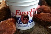 Comederos para pollos