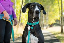 New Products for Spring/Summer 2016! / New leashes, collars, colors, and more coming out in 2016.