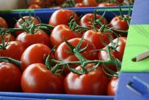 Tomaten | Tomatoes
