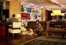 Nashville, Tennessee - Pet Friendly Hotels Near Me / Pet Friendly Hotels Near Nashville, Tennessee