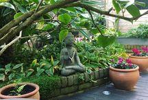 Urban gardens in shade