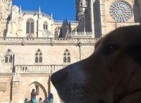 Selezione Vacanze da cani 2016