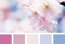 мои цвета