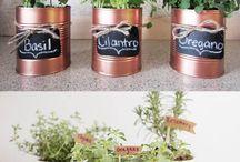 Maria  plantas