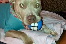Happy Dawg Grillz Ball Customers / We have the coolest Dog Balls for Dogs. Get yours now!